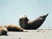 Seehundgymnastik