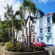 Palmen wachsen in England nur in Devon und Cornwall