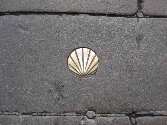 Die Muschel weist den Weg