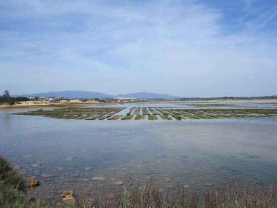 Muschelbänke in der Lagune von Alvor