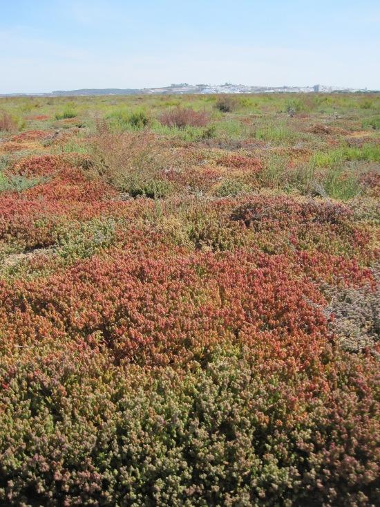 Salzwiese mit Blick auf Ayamonte