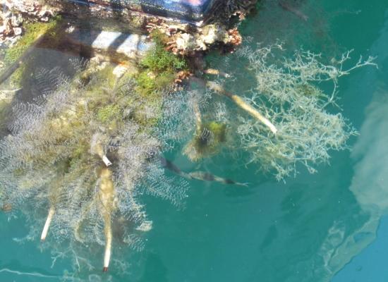 Unterwassergarten