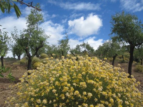 Sierra Nevada: Mandelbäume