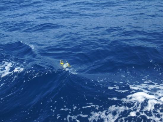 Wohin schwimmt sie?