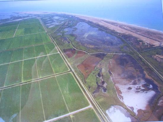 Reisfelder und Lagunen im Ebro-Delta