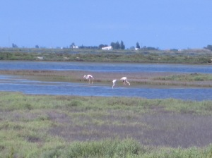 Flamingos im Ebro-Delta