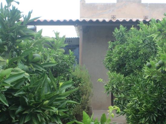 Casa im Olivenhain