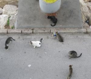 Katzenfütterungsstelle unter dem Paseo Dique de Levante