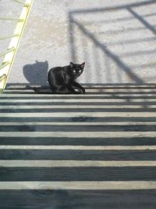 Der schwarze Panther von Torrevieja